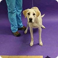 Adopt A Pet :: LUNA - Salt Lake City, UT