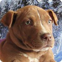 Adopt A Pet :: Hooch - Rancho Santa Fe, CA