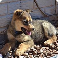 Adopt A Pet :: ROCKY - Taking Applications - Hurricane, UT