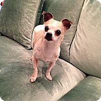 Adopt A Pet :: Minnie - Los Angeles, CA