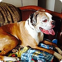 Adopt A Pet :: Marlee - Hamilton, ON