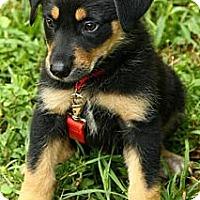 Adopt A Pet :: Edmund - Brattleboro, VT