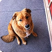 Adopt A Pet :: *Bear - Winder, GA