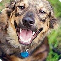 Adopt A Pet :: Odie - San Antonio, TX