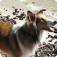 Adopt A Pet :: Stewart - La Habra, CA