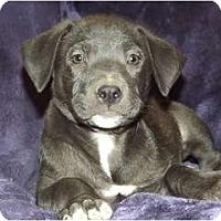 Adopt A Pet :: Dorothy - Phoenix, AZ