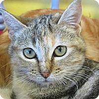 Adopt A Pet :: Polar - Mobile, AL