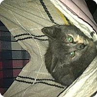 Adopt A Pet :: JETTER&JETTA - Clay, NY