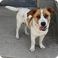 Adopt A Pet :: watson - Wallaceburg, ON