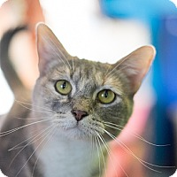 Adopt A Pet :: Sundance - Los Angeles, CA