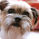 Adopt A Pet :: Agatha