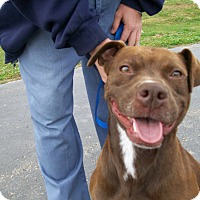 Adopt A Pet :: Dylan - Lancaster, OH