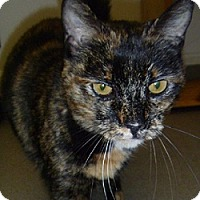 Adopt A Pet :: Tammy - Hamburg, NY