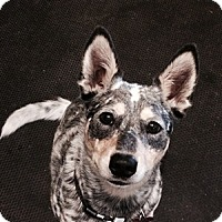 Adopt A Pet :: Mya is Deaf / Available! - Remus, MI