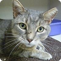 Adopt A Pet :: Obie - Hamburg, NY