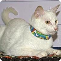 Adopt A Pet :: Apple - Englewood, FL