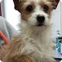 Adopt A Pet :: batman - mooresville, IN