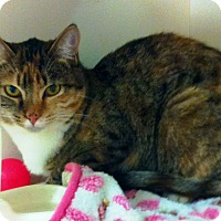 Adopt A Pet :: Windy - Riverside, CA