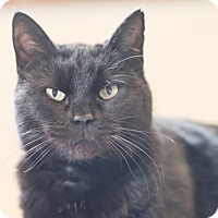 Adopt A Pet :: Belle - Wilmington, OH