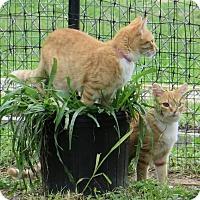 Adopt A Pet :: Emma - Gonzales, TX
