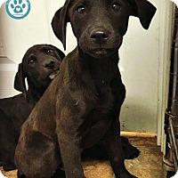 Adopt A Pet :: Quinna - Kimberton, PA