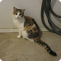 Adopt A Pet :: Isabella - Geneseo, IL