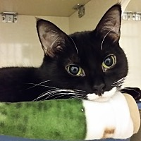 Adopt A Pet :: Louie - Westbury, NY