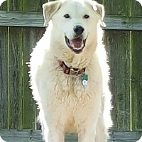 Adopt A Pet :: Charlie - Tulsa, OK