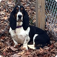 Adopt A Pet :: ABBY - Pennsville, NJ