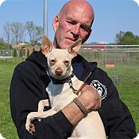 Adopt A Pet :: Kode - Elyria, OH