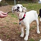 Adopt A Pet :: Mark - Special Needs (Has application)