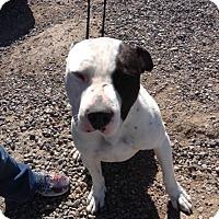 Adopt A Pet :: Petey - Cedaredge, CO