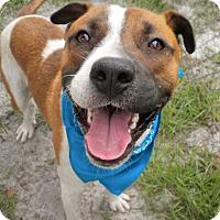 Adopt A Pet :: Mozart - Umatilla, FL