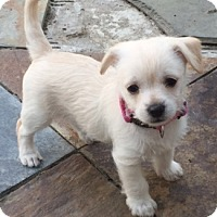 Adopt A Pet :: Swann - Castro Valley, CA