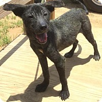 Adopt A Pet :: Kalb - Livingston, TX