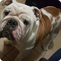 Adopt A Pet :: Cowboy - Odessa, FL