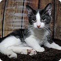 Adopt A Pet :: Wembley - Mississauga, Ontario, ON