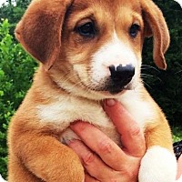 Adopt A Pet :: I'M ADPTD Emmi's