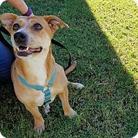 Adopt A Pet :: AGATHA - Phoenix, AZ