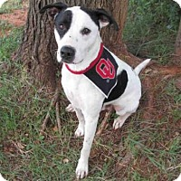 Adopt A Pet :: MCGEE - Oklahoma City, OK