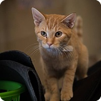 Adopt A Pet :: Nike - Madionsville, KY