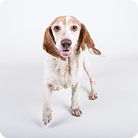 Adopt A Pet :: Lacey-Adopted - Decatur, GA