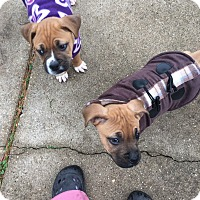 Adopt A Pet :: Nemo and Dory - Wyoming, MI