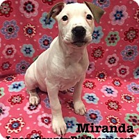 Adopt A Pet :: Miranda - Toledo, OH