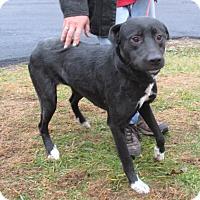 Adopt A Pet :: Remy - Reeds Spring, MO