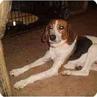 Adopt A Pet :: DORIE - latrobe, PA