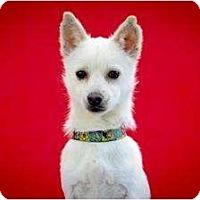Adopt A Pet :: Yuki - Los Angeles, CA