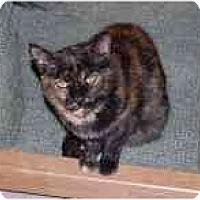 Adopt A Pet :: Lainie - Marietta, GA