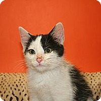 Adopt A Pet :: BRYCE - SILVER SPRING, MD