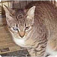 Adopt A Pet :: Cat Ballou - Lombard, IL
